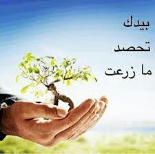 برمجة العرب